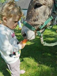 Elizan füttert einen Esel